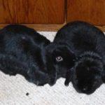 Bunny Herman
